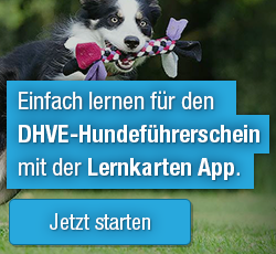 App zum Hundeführerschein des DHVE e.V.